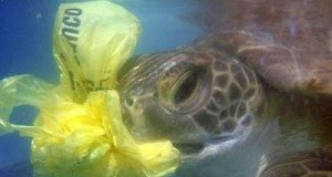 sea-turtle-eats-plastic1-300x225.jpg