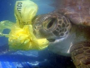 sea-turtle-eats-plastic1-300x225.jpg